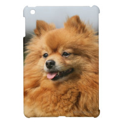 Pomeranian Watching Case For The iPad Mini
