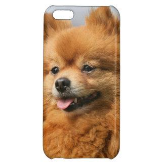 Pomeranian Watching iPhone 5C Cases