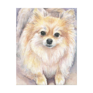 Pomeranian Watercolor Painting Pom Canvas Print