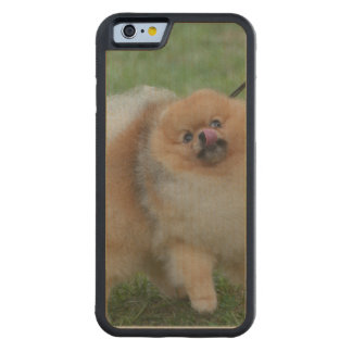 Pomeranian Carved® Maple iPhone 6 Bumper