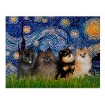 Pomeranians (four) - Starry Night Post Cards