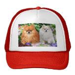 Pomeranians Hat
