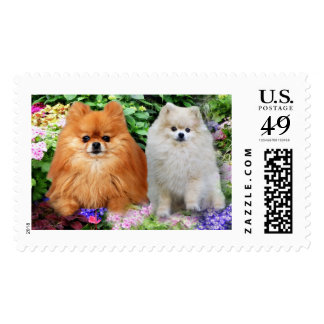 Pomeranians Postage Stamp