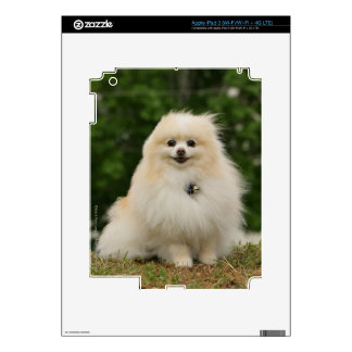 Pomeraning Sitting Decal For iPad 3