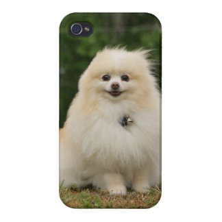 Pomeraning Sitting iPhone 4/4S Cover
