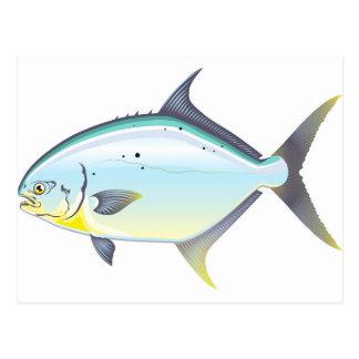 Pompano Florida fish vector illustration Postcard