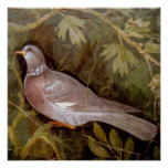 POMPEII COLLECTION / DOVE IN THE GARDEN POSTERS