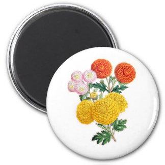 Pompon Chrysanthemums Refrigerator Magnets
