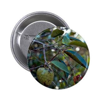 Pond Apple Pinback Buttons