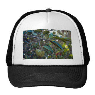 Pond Apple Trucker Hats