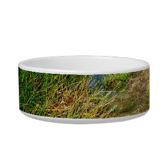 Pond bank with pond plants cat bowl