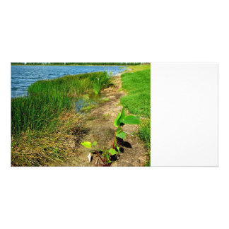 Pond bank with pond plants picture card