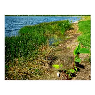 Pond bank with pond plants postcard
