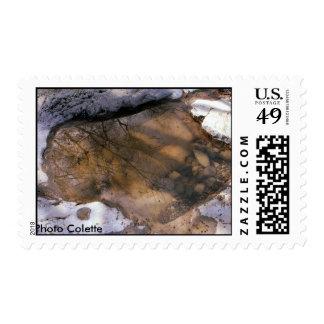 Pond Dárc Ardéche France Photo Colette Stamp
