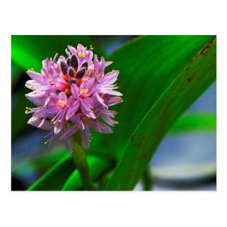 Pond Flower Postcard