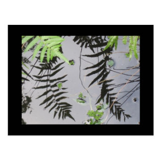 Pond Frond Reflections Card