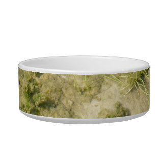 Pond grass and sand background cat bowl