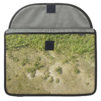 Pond grass and sand background sleeve for MacBook pro