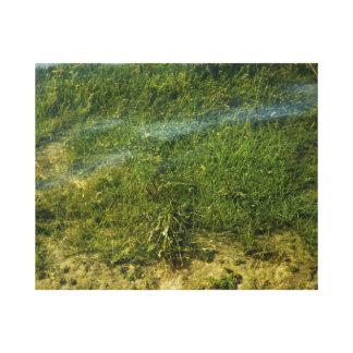 Pond grass underwater image canvas print