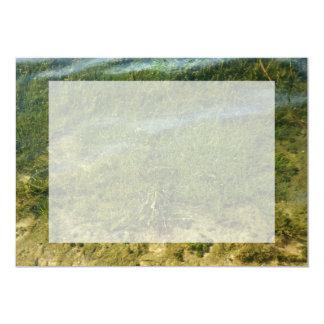 Pond grass underwater image card