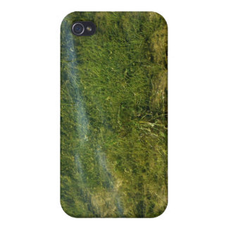 Pond grass underwater image iPhone 4/4S cases