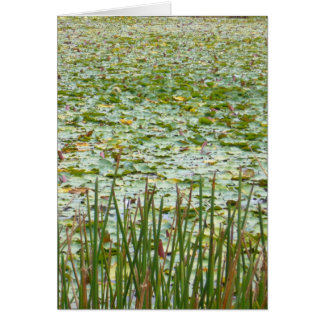 pond greenery card