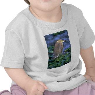 Pond Heron (Paddy Bird) T-shirts