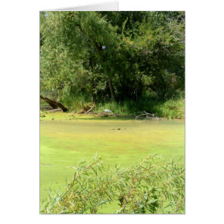 Pond Life Card