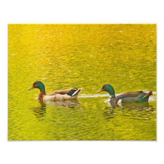 Pond of Gold Photo Print