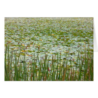 pond plants greeting card