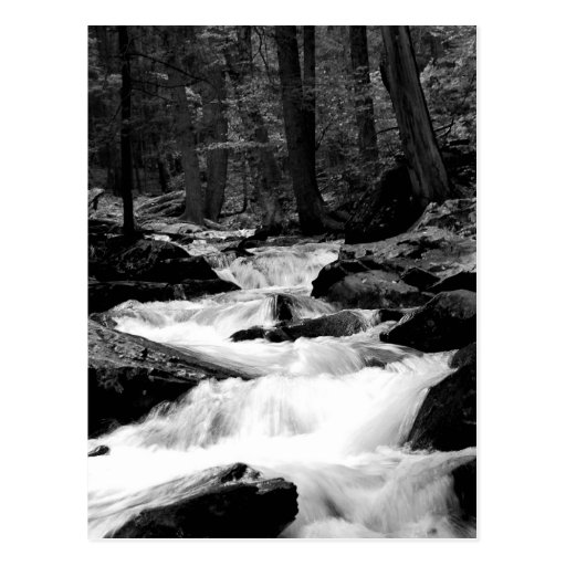 Pond Run Creek Postcard