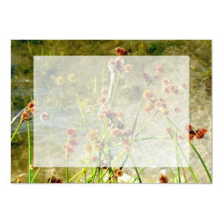 Pond shore plants, spiked puffs on stems photo card