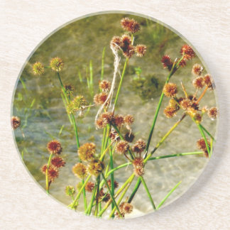 Pond shore plants, spiked puffs on stems photo drink coasters