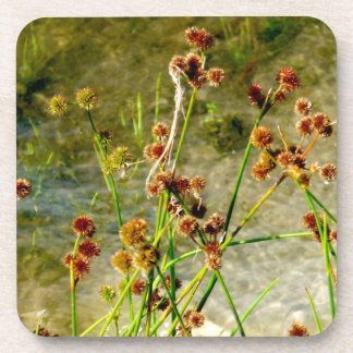 Pond shore plants, spiked puffs on stems photo drink coaster