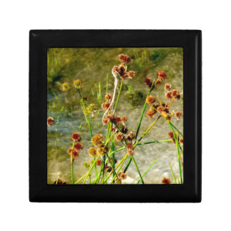 Pond shore plants, spiked puffs on stems photo gift box