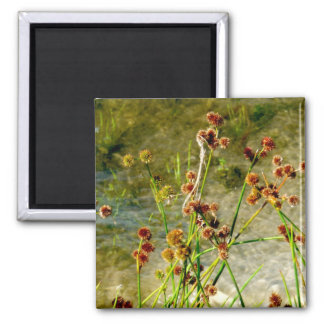 Pond shore plants, spiked puffs on stems photo fridge magnet
