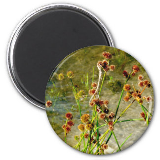 Pond shore plants, spiked puffs on stems photo magnet