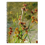 Pond shore plants, spiked puffs on stems photo note book