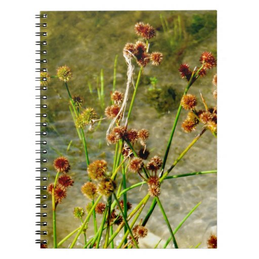 Pond shore plants, spiked puffs on stems photo spiral notebook