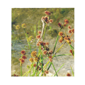 Pond shore plants, spiked puffs on stems photo note pads