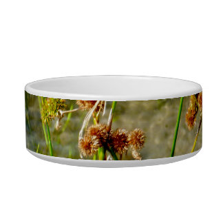 Pond shore plants spiked puffs on stems photo pet bowl