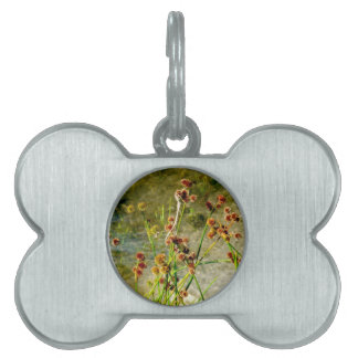 Pond shore plants, spiked puffs on stems photo pet name tag