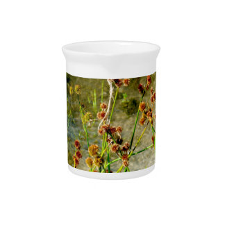 Pond shore plants, spiked puffs on stems photo beverage pitcher