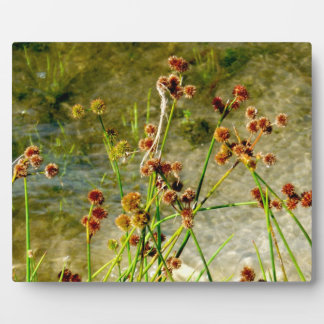 Pond shore plants, spiked puffs on stems photo plaque