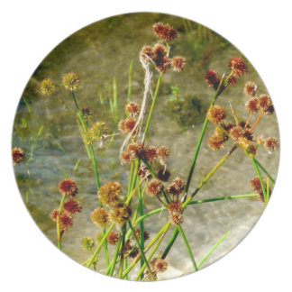 Pond shore plants, spiked puffs on stems photo dinner plate