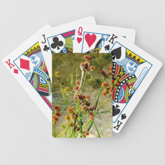 Pond shore plants, spiked puffs on stems photo deck of cards