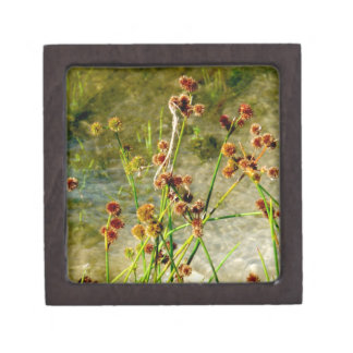 Pond shore plants, spiked puffs on stems photo premium trinket boxes