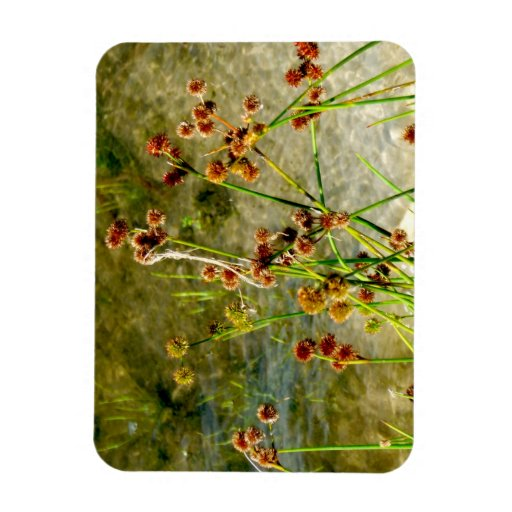 Pond shore plants, spiked puffs on stems photo vinyl magnets