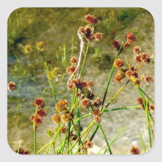 Pond shore plants, spiked puffs on stems photo square sticker