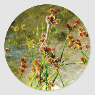 Pond shore plants, spiked puffs on stems photo stickers